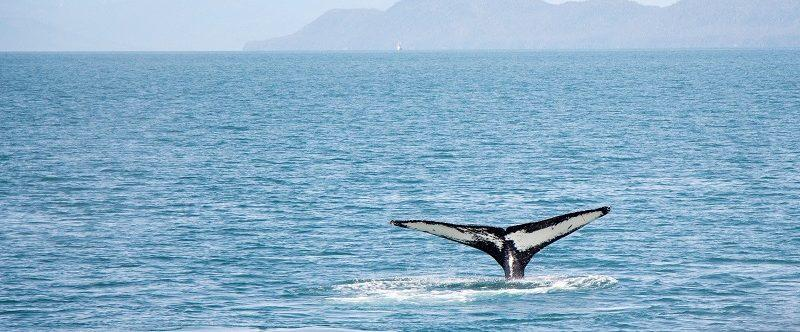 Baleias dao show em Ilhabela