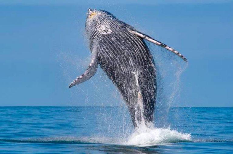 Avistamento de baleias e golfinhos velinn 1