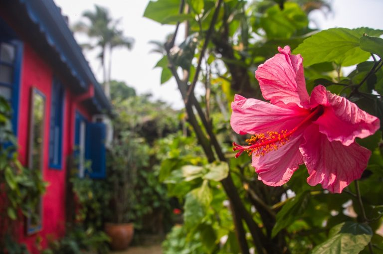 Velinn Pousada dos Hibiscos hibisco edited